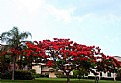 Picture Title - Floral Tree