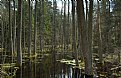 Picture Title - Swamp