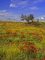 Picture Title - Poppy Fields