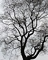 Picture Title - branches