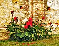 Picture Title - Flowers & Old Wall