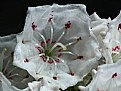 Picture Title - Mountain Laurel architect