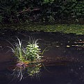 Picture Title - little pond