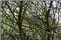 Picture Title - spring bush
