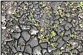 Picture Title - droughtscapes