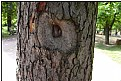 Picture Title - targethole tree