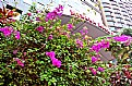 Picture Title - Flowers Against  Edifices