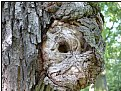 Picture Title - treehole
