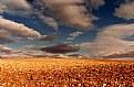 Picture Title - Cloudscape