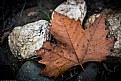 Picture Title - Leaf On Rocks