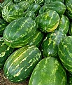Picture Title - Watermelons are ripe now