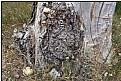 Picture Title - treetrunkscape