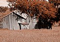 Picture Title - Old Barn