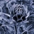 Picture Title - ,.,. unfurl ,.,.