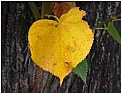 Picture Title - yellow heart