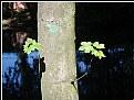 Picture Title - still tree