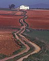 Picture Title - The Winding Path