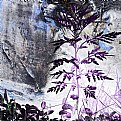Picture Title - Flora