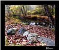 Picture Title - Autumn and the Mahwah