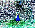 Picture Title - Exhibicionist