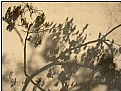 Picture Title - shadow plants