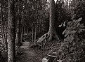 Picture Title - a walk in the woods