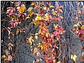 Picture Title - fall leaves