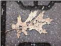 Picture Title - torn leaf still
