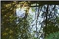 Picture Title - watertrees