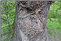 Picture Title - treehead