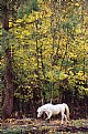 Picture Title - White Horse in Fall