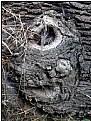 Picture Title - the hidden demon