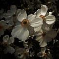 Picture Title - anemone