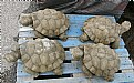 Picture Title - Tortise
