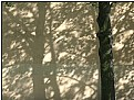 Picture Title - shadow tree