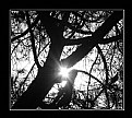 Picture Title - Tree 28