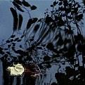 Picture Title - dark water