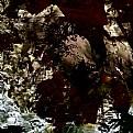 Picture Title - Corvus