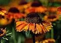 Picture Title - Floral DOF/POF