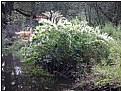 Picture Title - white bush