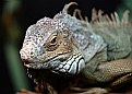 Picture Title - Dragon lizard