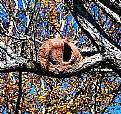 Picture Title - Ovenbird Nest