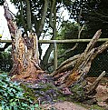 Picture Title - Tree stumps
