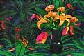 Picture Title - Lilies & Parrots
