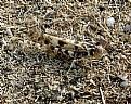 Picture Title - Grasshopper