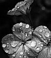 Picture Title - Waterdrops
