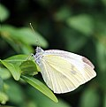 Picture Title - White Butterfly