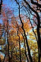 Picture Title - Backlit Fall Trees