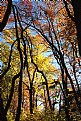 Picture Title - Backlit Fall Trees 2