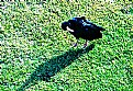 Picture Title - Bird & Shadow